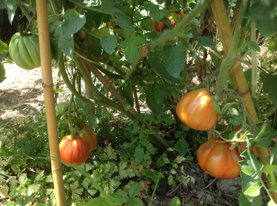 ...coltivare un giardino o un orto è come coltivare la propria anima…