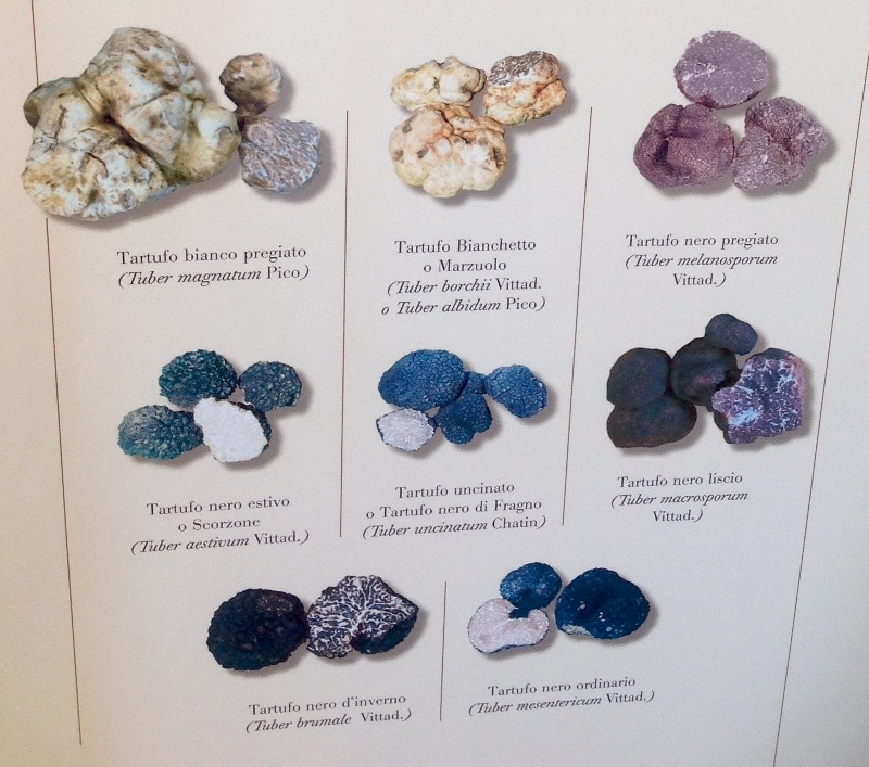 Tipologie tartufi