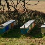 Azienda agricola Capoferri