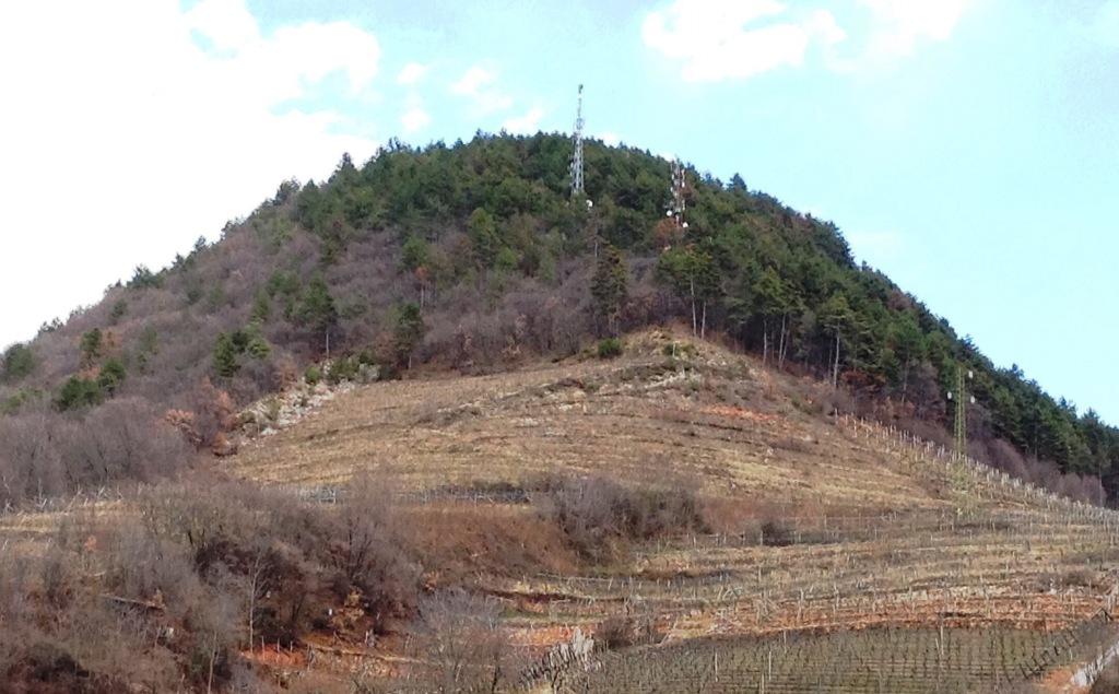Collina di San Michele e Faedo
