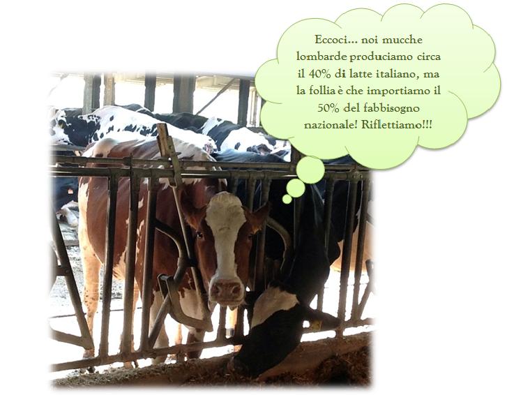 Il latte in Lombardia