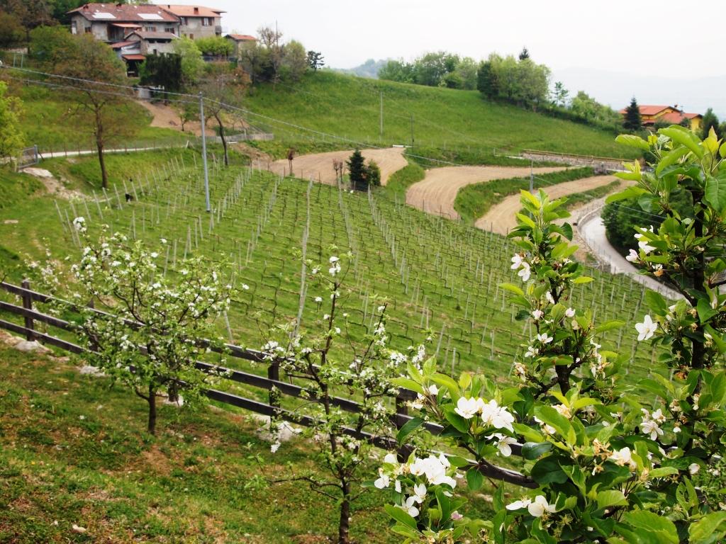 Vigneti Azienda Agricola Tosca